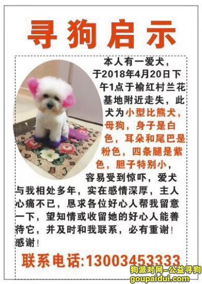 三亚找狗,三亚吉阳区榆亚路榆红村酬谢五千元寻找比熊,它是一只非常可爱的宠物狗狗,希望它早日回家,不要变成流浪狗。