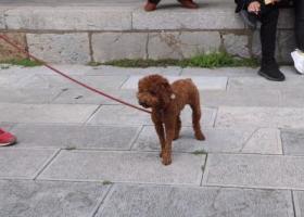 寻狗启示,在鼓楼区汉中门附近丢失,它是一只非常可爱的宠物狗狗,希望它早日回家,不要变成流浪狗。
