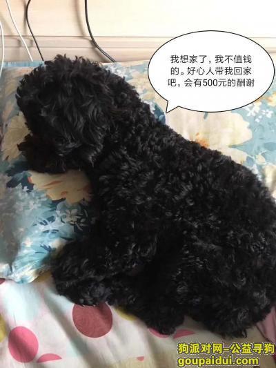 铁岭找狗,寻狗启示,我家狗狗叫黑淘!,它是一只非常可爱的宠物狗狗,希望它早日回家,不要变成流浪狗。