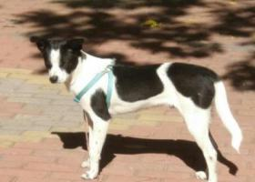 寻找狗狗金山在北京丰台区木樨园丹陛华附近走失