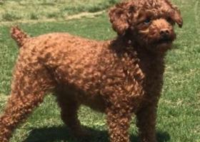 寻狗启示,重金寻狗,见狗马上转账1000元,它是一只非常可爱的宠物狗狗,希望它早日回家,不要变成流浪狗。