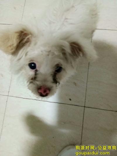 防城港寻狗启示,防城港 港口区 重金寻狗,它是一只非常可爱的宠物狗狗,希望它早日回家,不要变成流浪狗。