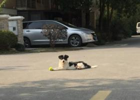 寻狗启示,泗泾金港二期离家未归 Q2453773997,它是一只非常可爱的宠物狗狗,希望它早日回家,不要变成流浪狗。