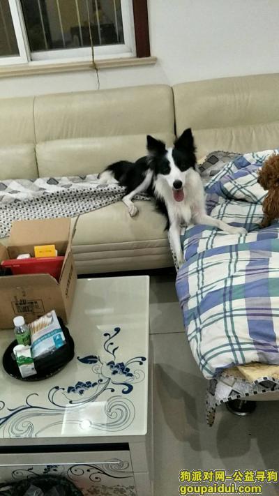 盐城寻狗主人,江苏省盐城市阜宁县啊,它是一只非常可爱的宠物狗狗,希望它早日回家,不要变成流浪狗。