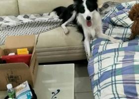 寻狗启示,江苏省盐城市阜宁县啊,它是一只非常可爱的宠物狗狗,希望它早日回家,不要变成流浪狗。