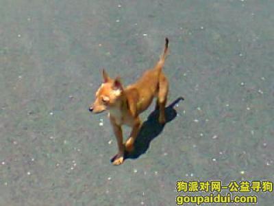 玉溪寻狗网,请看到这只迷你型小狗的帮忙寻找联系我们,它是一只非常可爱的宠物狗狗,希望它早日回家,不要变成流浪狗。