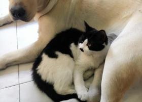 寻狗启示,东丽张贵庄汇海南里附近寻一只拉布拉多,它是一只非常可爱的宠物狗狗,希望它早日回家,不要变成流浪狗。