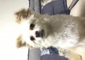 寻狗启示,丢失的狗狗找主人,很着急,它是一只非常可爱的宠物狗狗,希望它早日回家,不要变成流浪狗。