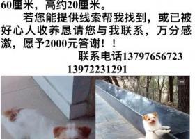 襄州寻狗,求热心人士帮忙,重酬感谢!!!