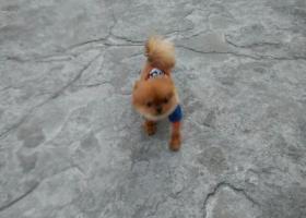 寻狗启示,顾高工业园区,秧盘厂十字路口没有的帮我找找谢谢,它是一只非常可爱的宠物狗狗,希望它早日回家,不要变成流浪狗。
