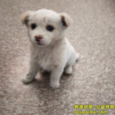威海找狗主人,文登捡到的,白狗,耳朵有点黄,土狗,它是一只非常可爱的宠物狗狗,希望它早日回家,不要变成流浪狗。
