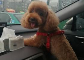 寻狗启示,爱犬丢失,重金酬谢提供线索者。,它是一只非常可爱的宠物狗狗,希望它早日回家,不要变成流浪狗。