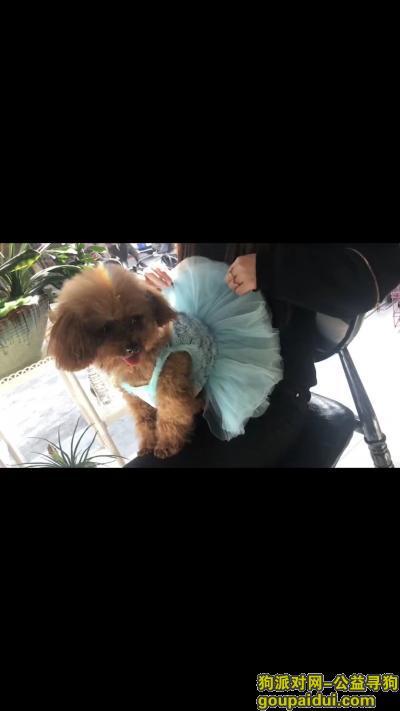 黄山找狗,找狗,找狗,找狗,泰迪泰迪,它是一只非常可爱的宠物狗狗,希望它早日回家,不要变成流浪狗。