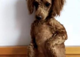 辽宁省锦州市 找狗狗,名字叫豆包