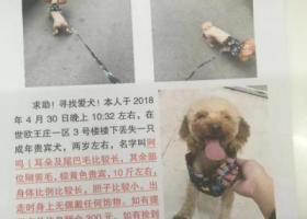 寻狗启示,爱狗丢失求大家帮忙,棕色的有十斤重,4月30日走丢,它是一只非常可爱的宠物狗狗,希望它早日回家,不要变成流浪狗。