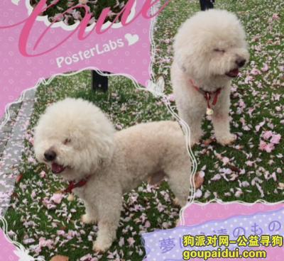 湖州找狗,浙江寻找大头儿子春春,它是一只非常可爱的宠物狗狗,希望它早日回家,不要变成流浪狗。