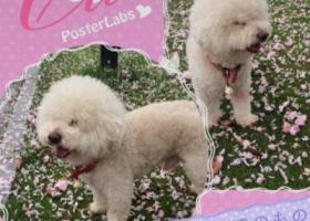 寻狗启示,浙江寻找大头儿子春春,它是一只非常可爱的宠物狗狗,希望它早日回家,不要变成流浪狗。