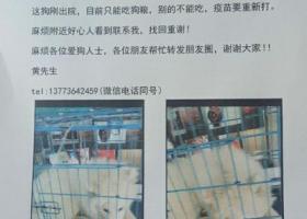 寻狗启示,南通城南新村85幢5月1日丢失了一条萨摩,它是一只非常可爱的宠物狗狗,希望它早日回家,不要变成流浪狗。
