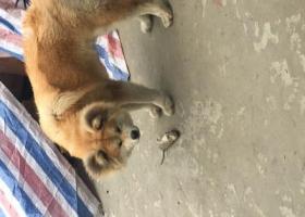 寻狗启示,4.30早上温州鹿城区望江东路附近走失,它是一只非常可爱的宠物狗狗,希望它早日回家,不要变成流浪狗。