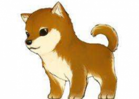 寻狗启示,18年5月1日,在北辰道与京津公路交口捡到一只小狗,寻找它的主人,它是一只非常可爱的宠物狗狗,希望它早日回家,不要变成流浪狗。