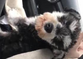 寻狗启示,杭州滨江区重金寻狗,酬金一万,狗子可能还在街头流浪,心痛万分,它是一只非常可爱的宠物狗狗,希望它早日回家,不要变成流浪狗。