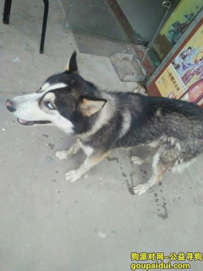 黄冈寻狗启示,寻找狗主人或者领养人,它是一只非常可爱的宠物狗狗,希望它早日回家,不要变成流浪狗。