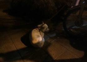 寻狗启示,杭州城西银泰附近万家花城,它是一只非常可爱的宠物狗狗,希望它早日回家,不要变成流浪狗。