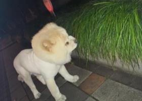 寻狗启示,寻找狗狗主人   白色,它是一只非常可爱的宠物狗狗,希望它早日回家,不要变成流浪狗。