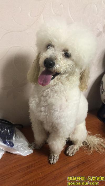 寻狗启示,找丢丢-比熊犬。城南滨江花园附近丢了!7岁的比熊,它是一只非常可爱的宠物狗狗,希望它早日回家,不要变成流浪狗。