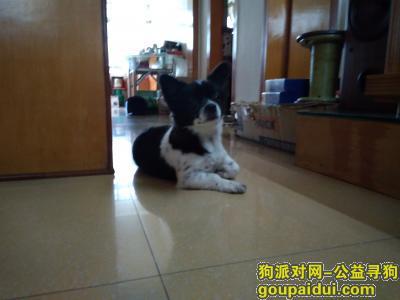 ,江海区江翠路捡到狗一只,它是一只非常可爱的宠物狗狗,希望它早日回家,不要变成流浪狗。
