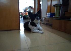 寻狗启示,江海区江翠路捡到狗一只,它是一只非常可爱的宠物狗狗,希望它早日回家,不要变成流浪狗。