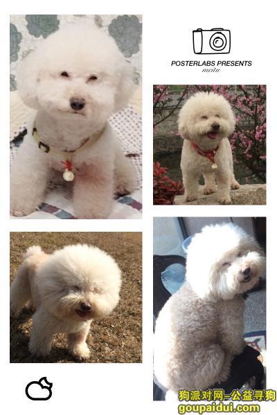 湖州丢狗,寻找大头儿子(春春)酬谢1万元,它是一只非常可爱的宠物狗狗,希望它早日回家,不要变成流浪狗。