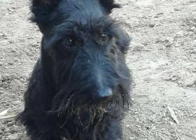 寻狗启示,请您帮忙找这只黑狗母,它是一只非常可爱的宠物狗狗,希望它早日回家,不要变成流浪狗。