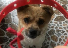 寻狗启示,重庆南岸区锋邸内捡到狗狗一只,它是一只非常可爱的宠物狗狗,希望它早日回家,不要变成流浪狗。