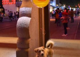 寻狗启示,无锡寻狗,现金5K,骗子勿扰,它是一只非常可爱的宠物狗狗,希望它早日回家,不要变成流浪狗。