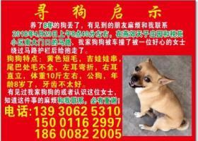 燕郊天子庄园和税苑小区马路上谁捡了一条被车撞的狗