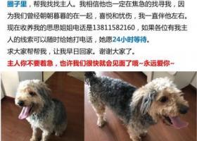 寻狗启示,在潘家园捡到一条狗,请传播,它是一只非常可爱的宠物狗狗,希望它早日回家,不要变成流浪狗。