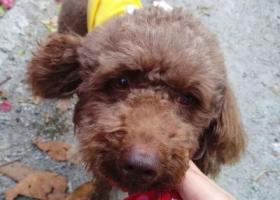 寻狗启示,麻烦各路好心人帮帮忙,它是一只非常可爱的宠物狗狗,希望它早日回家,不要变成流浪狗。
