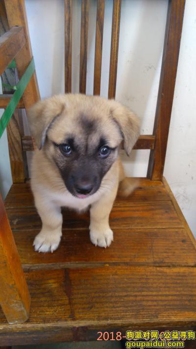铜陵寻狗启示,寻找我可爱的小狗宝宝豆豆,它是一只非常可爱的宠物狗狗,希望它早日回家,不要变成流浪狗。
