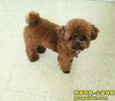 自贡找狗,各位好心人,帮帮我们,找回我们家宝贝,它是一只非常可爱的宠物狗狗,希望它早日回家,不要变成流浪狗。