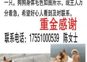 寻狗启示,无锡市新吴区景南苑小区寻找爱犬,它是一只非常可爱的宠物狗狗,希望它早日回家,不要变成流浪狗。