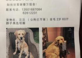 上海市长宁区安龙路仙霞路酬谢一万元寻找金毛