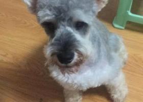 寻狗启示,找狗,大家帮帮忙5月13号被人抱走,它是一只非常可爱的宠物狗狗,希望它早日回家,不要变成流浪狗。