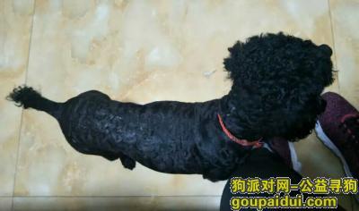 寻狗启示,寻狗启示,。在宁海县双林风景区丢失一只黑色小体泰迪犬,它是一只非常可爱的宠物狗狗,希望它早日回家,不要变成流浪狗。