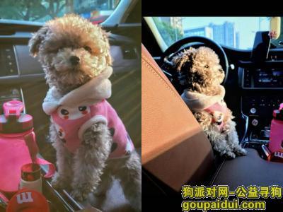 寻狗启示,无锡滨湖区山明水秀大饭店酬谢五千元寻找泰迪,它是一只非常可爱的宠物狗狗,希望它早日回家,不要变成流浪狗。
