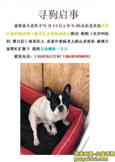 寻狗启示,万元寻黑白法斗犬请求大家帮忙分享,它是一只非常可爱的宠物狗狗,希望它早日回家,不要变成流浪狗。