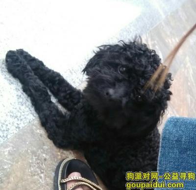 寻狗启示,寻狗启示,宁海双林丢失黑泰迪,它是一只非常可爱的宠物狗狗,希望它早日回家,不要变成流浪狗。