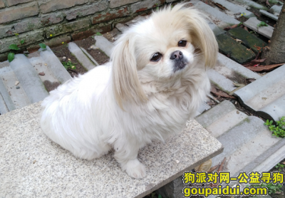 荆州丢狗,寻找十岁的球球,祈祷平安回家,它是一只非常可爱的宠物狗狗,希望它早日回家,不要变成流浪狗。