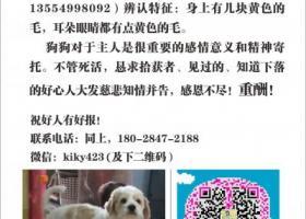 寻狗启示,寻犬启示:遗失于广东省博罗县长贵村。,它是一只非常可爱的宠物狗狗,希望它早日回家,不要变成流浪狗。