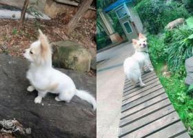 长沙市雨花区沙子塘公交站寻找爱犬